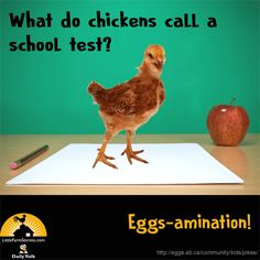 What do chickens call a school test? Funny Jokes And Riddles, Farm Jokes, Funny Work Jokes, Cute Jokes, Corny Jokes, Funny Jokes For Kids, Funny Puns, Work Humor, Kid Jokes