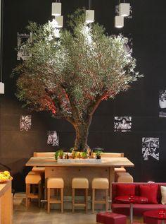 Vapiano-Olivenbaum – Das Einrichtungskonzept stammt von Stardesigner Matteo Thun