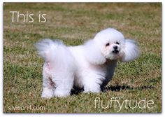 "silvieon4: Thoughtless Thursday: What is ""fluffytude""?"