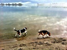 beaglesinneverland
