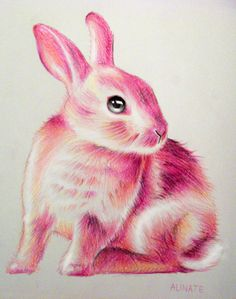 Petit Lapin, Little bunny made with colored pencil #bunny #rabbit #bun #animal #pink #colored pencil #cute bunny #french art #french artist #little bunny #realistic art #alinate #alinateart #art #artist on tumblr #crayonde couleur #lapin #conejo #brightcolors #kawaii #drawing #lapin