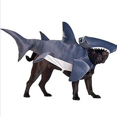 Dress your pup as a shark for Halloween this year!