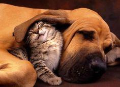 Must be comfy underneath that big ol' ear