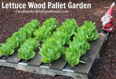 This year I will be planting a large salad garden and I thought it would be fun to grow my lettuce and other greens in wood pallets to change things up a bit in the backyard. All you really need to do a little pallet gardening is a wood pallet, some good soil, and a …