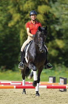 Credit: Courtesy of Trafalgar Square Books Natural gymnastic work can ensure that your horse's joints become more supple and his stamina and muscle tone improve.