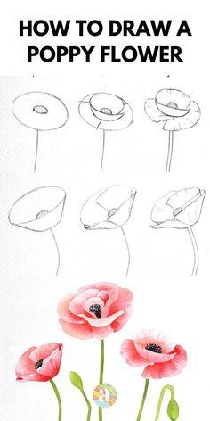idee dessin coquelicot à faire étape par étape au crayon esquisse à colorier aux crayons en couleur Easy Flower Drawings, Flower Art Drawing, Flower Drawing Tutorials, Flower Sketches, Pencil Art Drawings, Art Drawings Sketches, Painting & Drawing, Easy Sketches, Realistic Flower Drawing
