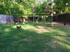 Hawk proof chicken run idea.