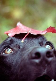 #cute #dog with a #leaf on his head. #animals #funny #closeup #sweet