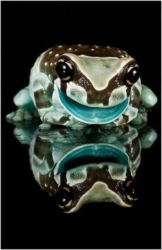 40 Amazing Frog Pictures To Understand Them Better - Mammals Funny Frogs, Cute Frogs, Nature Animals, Animals And Pets, Cute Animals, Reptiles And Amphibians, Mammals, Beautiful Creatures, Animals Beautiful