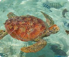 This is one of my favorite sea animals Turtle Love, Marine Biology, Sea World, Ocean Life, Beautiful Creatures, Animals Beautiful, Cute Animals, Wild Animals, Beautiful People