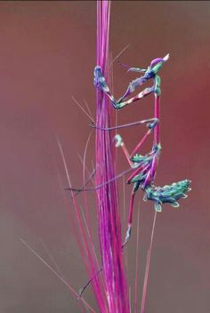 Praying Mantis, one of the few insects I like! Cool Insects, Bugs And Insects, Beautiful Bugs, Amazing Nature, Amazing India, Beautiful Creatures, Animals Beautiful, Nature Rose, Cool Bugs