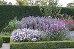 Cottage garden plants contained by clipped box hedge Formal Gardens, Outdoor Gardens, Green Velvet Boxwood, Cottage Patio, Box Hedging, Purple Garden, Plant Design, Back Gardens, Dream Garden