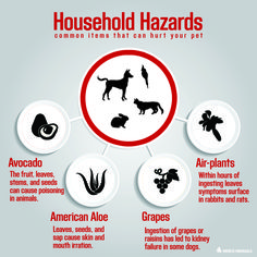 Learn more about common pet household hazards.