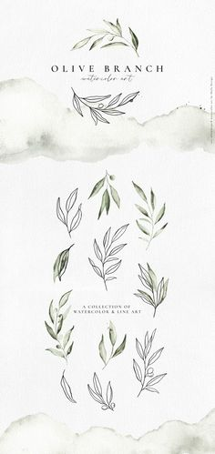 Olive branch watercolor & line art by Skyla Design on Creative Market - . - Olive branch watercolor & line art by Skyla Design on Creative Market – - Watercolor Illustration, Graphic Illustration, Art Illustrations, Watercolor Design, Watercolor Font, Watercolor Branding, Whale Illustration, Watercolor Artists, Watercolor Painting