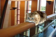 Chat monorail