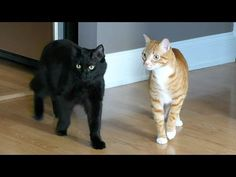 Moving with Cats - Funny Compilation! - We Love Cats and Kittens