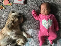 Quality ShihTzu for quality homes for Pets and Therapy dogs. We offer LIFETIME advice for your Glory Ridge ShihTzu. Imperial shihtzu to standard size shihtzu in every color. Purebred Dogs, Separation Anxiety, Therapy Dogs, Shih Tzus, Losing A Dog, Extreme Weather, Training Your Dog, Going To Work, Dog Owners