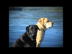 """Lola...A Good Life Well Lived.  Music from Kate Wallace """"Wherever You Walk"""" off the cd """"Too Long From The Sea"""""""
