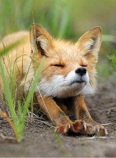 """Igor Shpilenok, """"Stretching Fox"""""""
