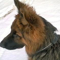 Sporing av hund og katt – www. Corgi, Animals, Corgis, Animales, Animaux, Animal, Animais, Dieren