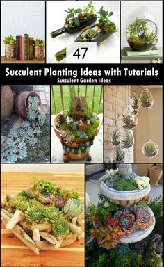 47 Succulent Planting Ideas with Tutorials | Succulent Garden Ideas