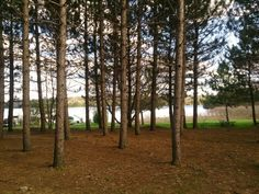 Algonquin povincial park ontario