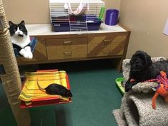 Dog, cat, and rat surrendered to shelter, refuse to be separated (6+ photos)