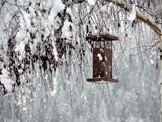 Submit your winter weather photos to The Almanac! Credit: Wanda Rains