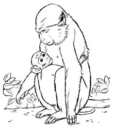 Mother And Baby Monkey Coloring Page