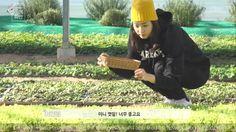 이연희(Lee Yeon Hee)의 봄의 화반(Flower Bibimbob)_#1