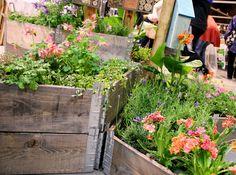 Her er ekspertenes beste tips til planting i pallekarm eller plantekasse.