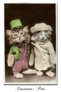 I don't know why I love vintage photos of animals in clothing. LOL! #vintage