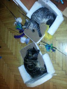 Maine Coon Kater Spirit und Maine Katze Mystery (als Kitten) beim gemeinsamen spielen Mystery, Cats, Animals, Playing Games, Arts And Crafts, Gatos, Animais, Animales, Kitty Cats