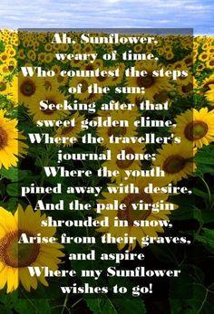 Ah Sunflower Poem William Blake