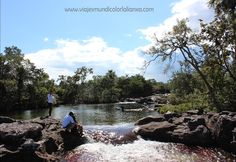Caño Cristales en la Serranía de la Macarena, Colombia.
