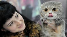 Vets warn that breeding of the Scottish Fold Cat should stop because of health fears.