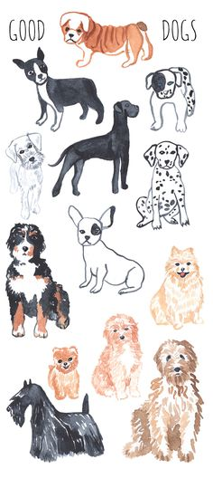 Animal set by anyuka on Creative Market - Illustrations - Art And Illustration, Watercolor Illustration, Animal Illustrations, Animal Drawings, Art Drawings, Yorkshire Terrier Puppies, Boston Terrier, Guache, Cute Animals