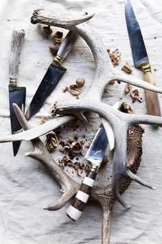 Natural Antler and Horn | from Poglia