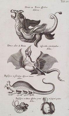 Dragon varieties continued