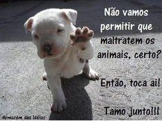 EU PROTEJO! <3 #petmeupet #cachorro #gato #euprotejo #amoanimais #direitoanimais