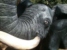 indigenous wildlife Wildlife, Elephant, Elephants