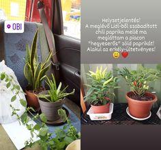Kertészkedős kontent blogra by AniTiger Lidl, Ale, Plants, Photos, Pictures, Photographs, Ales, Plant, Planting