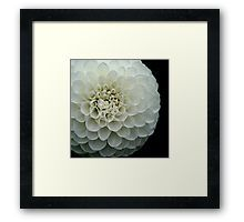'Dahlia spirals ' by Helen Kelly Dahlia Flower, Flowers, Framed Prints, Art Prints, Spiral, Pattern, Beautiful, Decor, Art Impressions
