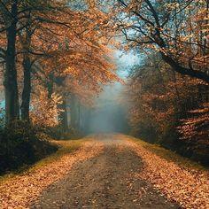 Une balade sur ce chemin, un café, de la laine... J'adore octobre!