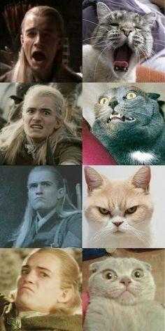 When they found a cat for every Legolas face.- When they found a cat for every Legolas face. When they found a cat for every Legolas face. Jrr Tolkien, Legolas Et Thranduil, Thranduil Funny, Aragorn, Meme Chat, Rings Tumblr, Funny Memes, Hilarious, Funniest Memes