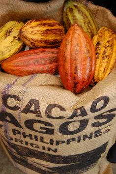 cacao in sack...