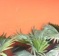 Aesthetic orange walls and green plants Orange Aesthetic, Aesthetic Colors, Aesthetic Pictures, Aesthetic Beauty, Tumblr Backgrounds, Aesthetic Backgrounds, Palm Trees Tumblr, Murs Oranges, Orange You Glad