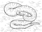 Sonoran Desert Sidewinder coloring page from Viper Snake category. Select from 31927 printable crafts of cartoons, nature, animals, Bible and many more. Free Printable Coloring Pages, Coloring For Kids, Coloring Pages For Kids, Desert Colors, Desert Art, Snake Coloring Pages, Free Coloring Pictures, Snake Drawing, Desert Animals