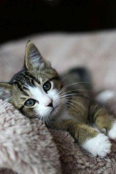 Do Kittens remember their Siblings? http://www.imagesforpets.com/do-kittens-remember-their-siblings/