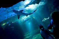 Construit en 1867, il s'agit du plus vieil aquarium de France, mais aussi du plus grand avec ses 5,3 millions de litres d'eau utilisés et ses 10 000 poissons et invertébrés à observer. Source image: Paris Select Book